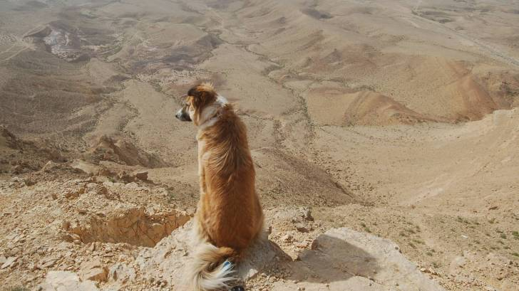 dog looking over a deep canyon