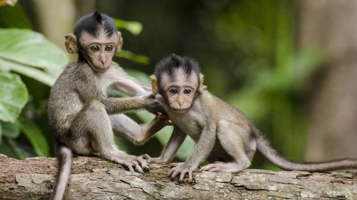 monkeys in africa