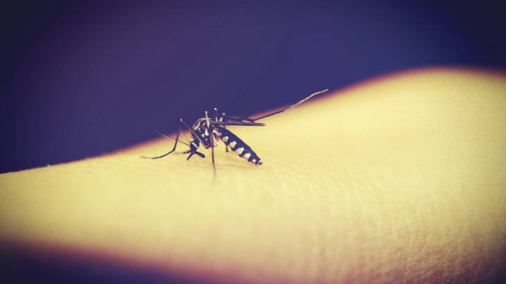 mosquito biting an arm