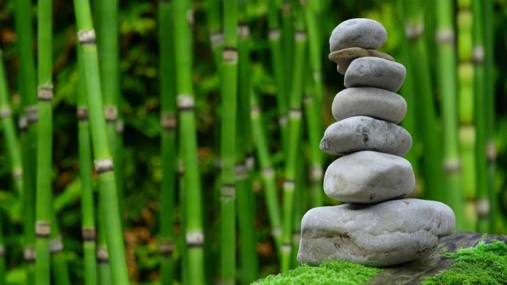 zen garden with bamboo