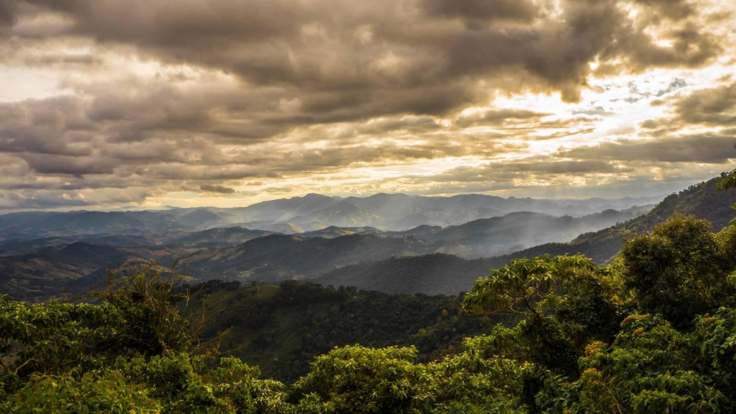 Brazillan rain forest