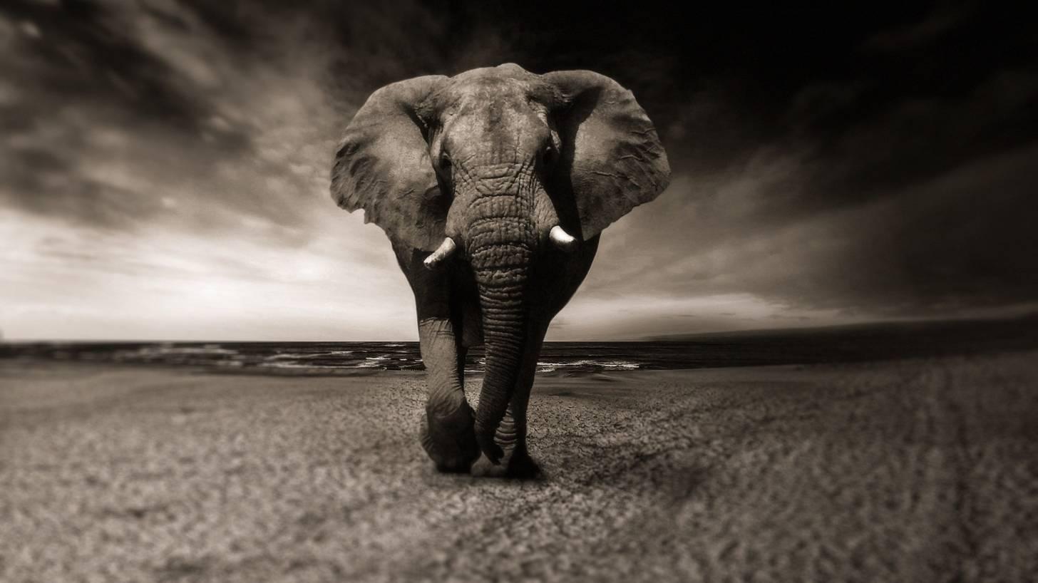 elephant trampling