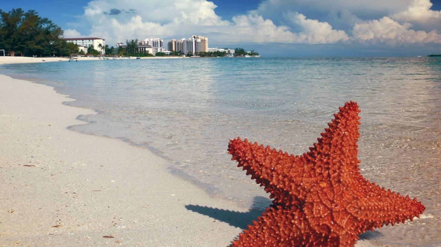 star fish on a bahama beach