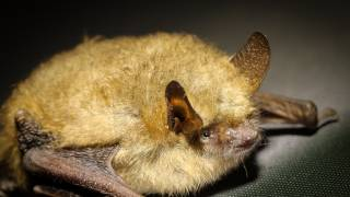 brown bat on the ground
