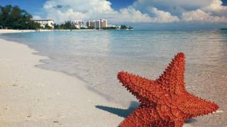 star fish on a bahama beach