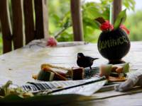 dominica island food and drink