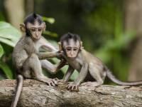 monkeys in africa